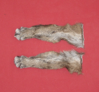 Picture of this lot Tanned Cougar Mountain Lion Heads, Feet, Tails, Pieces