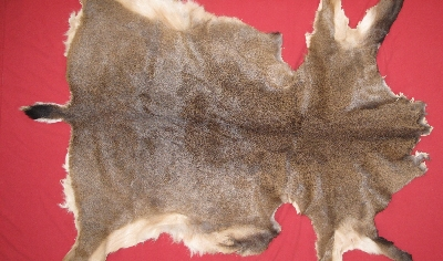 Picture of this lot Tanned Black Tail Deer Hides, Furs, Pelts, Skins