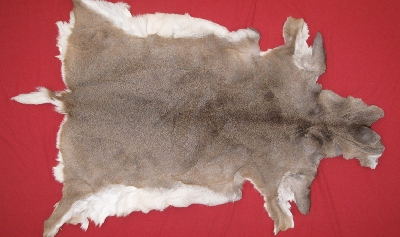 Picture of this lot Tanned White Tail Deer Hides, Furs, Pelts, Skins