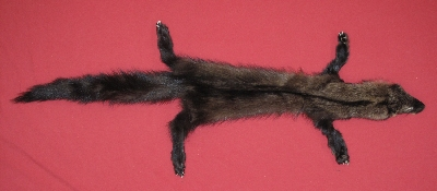 Picture of this lot Tanned Taxidermy Fisher Hides, Furs, Pelts, Skins