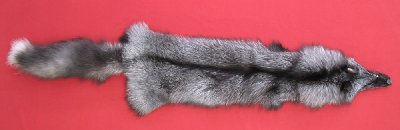 Picture of this lot Tanned Pearl Fox Hides, Furs, Pelts, Skins