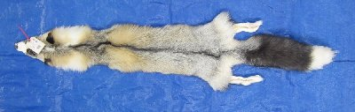 Picture of this lot Tanned Platinum Cross Fox Hides, Furs, Pelts, Skins