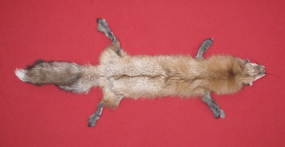 Picture of this lot Tanned Sapphire Fox Hides, Pelts, Furs
