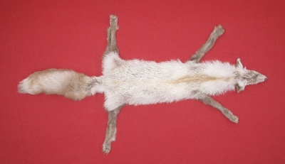 Picture of this lot Tanned Furs - Taxidermy Miscellaneous Fox