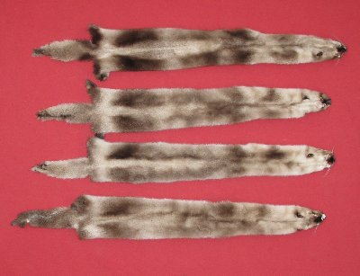 Picture of this lot Tanned Ranch Mink Hides, Furs, Pelts, Skins
