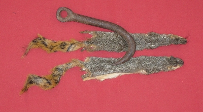 Picture of this lot Tanned Fox Squirrel Hides, Furs, Pelts, Skins