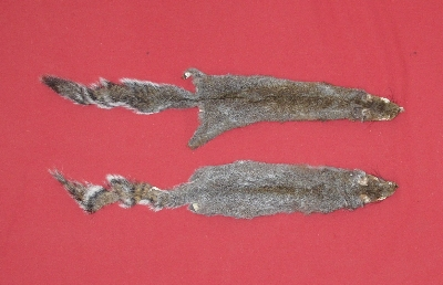 Picture of this lot Tanned Grey Squirrel Hides, Furs, Pelts, Skins