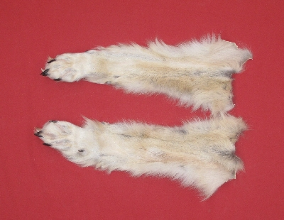 Picture of this lot Tanned Wolf Heads, Feet, Tails, Pieces
