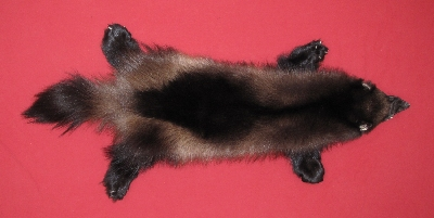 Picture of this lot Tanned Taxidermy Wolverine Hides, Furs, Pelts, Skins
