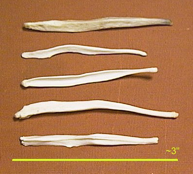 Picture of this lot Baculum Bones Mountain Man Toothpicks